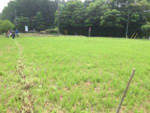 鳩山町 畑